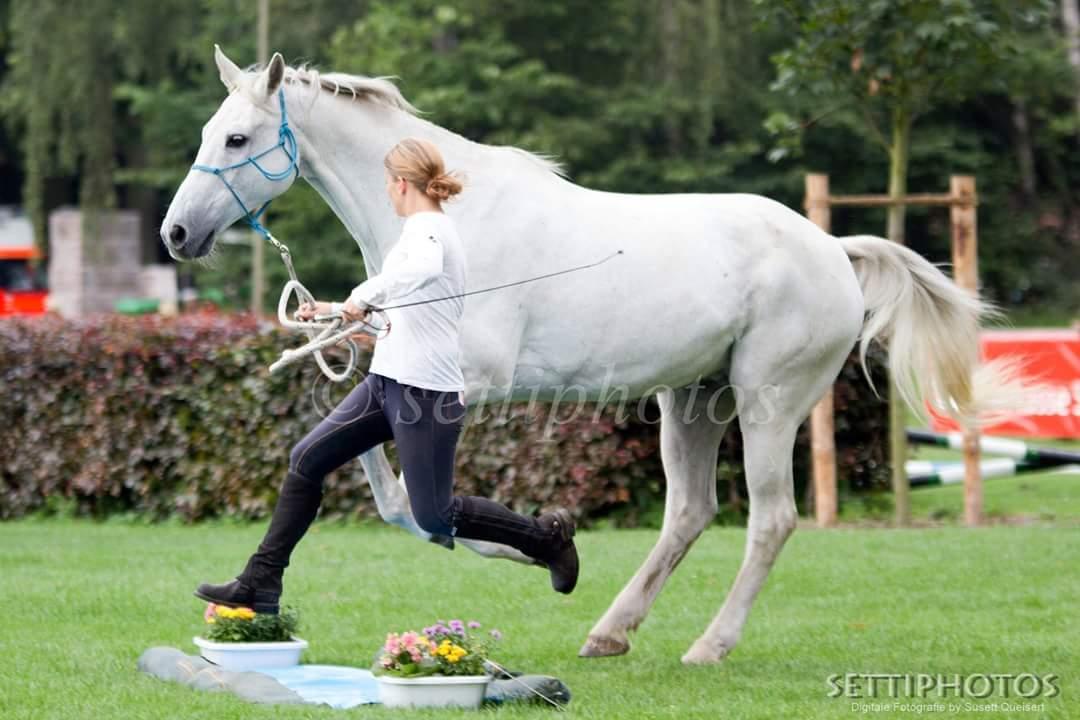 Horse Agility nicht nur für Youngster